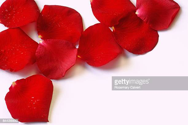 Red rose petals with water drops.
