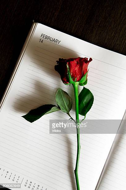 Red rose with blank open dairy on table