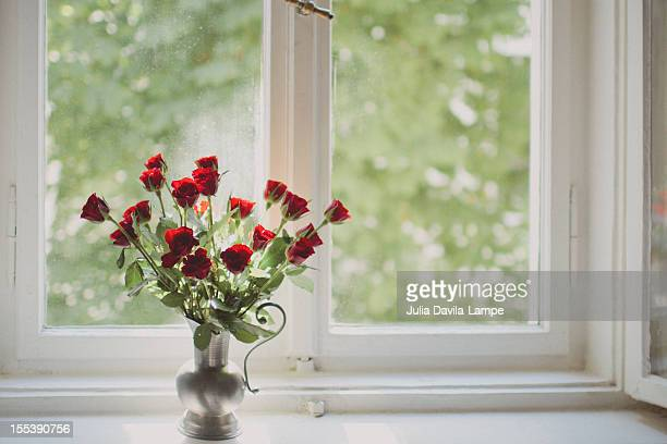 red roses on window sill - julia rose stock pictures, royalty-free photos & images