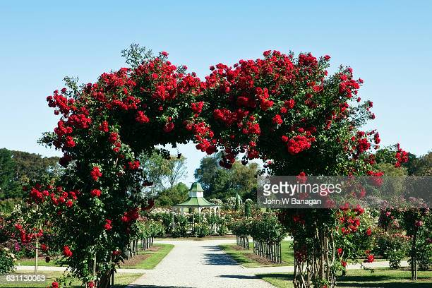Red roses, Werribee Mansion, Melbourne