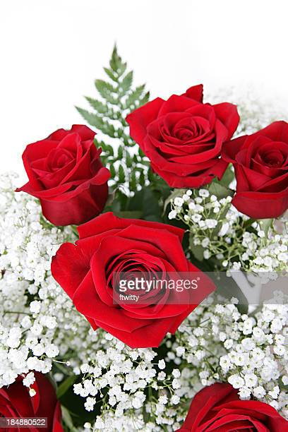 Red Roses With Baby's Breath on White