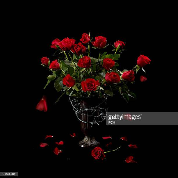 Red roses wrapped in barbed wire