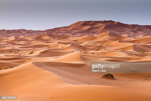 red sand dunes in erg chebbi, sahara desert. merzouga, morocc - merzouga stock pictures, royalty-free photos & images