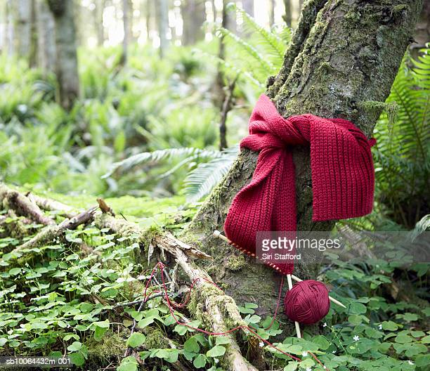 Red scarf being knit around trunk of tree in forest