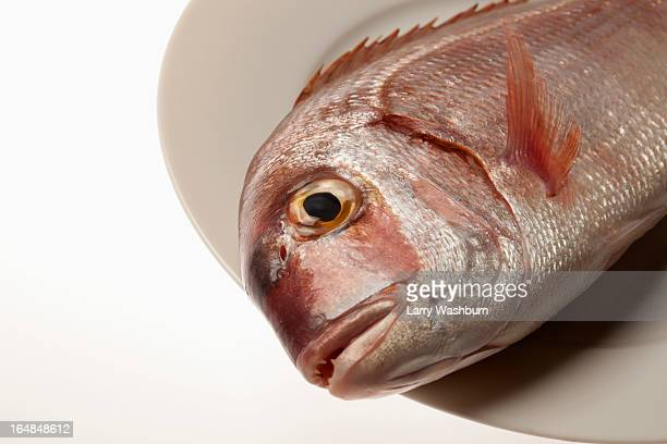 Red sea bream fish head on plate