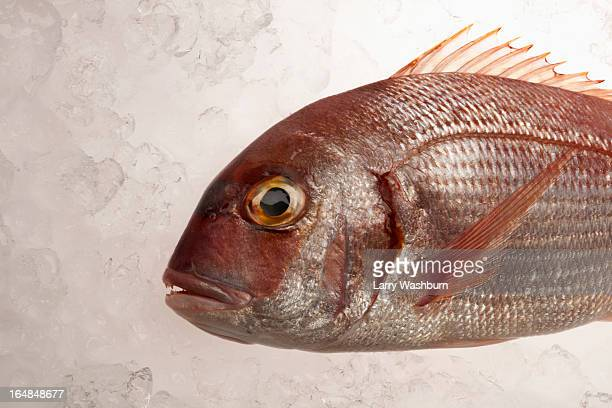 Red Sea Bream on ice