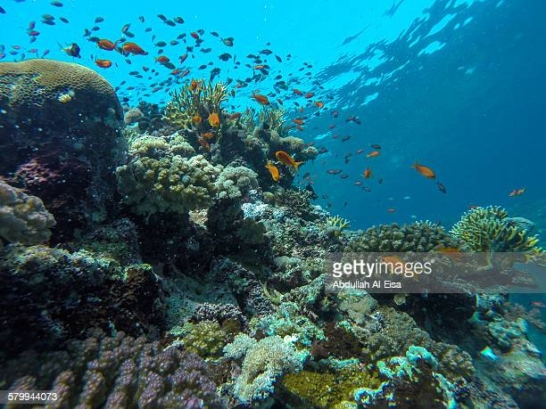 red sea marine life - red sea stock pictures, royalty-free photos & images