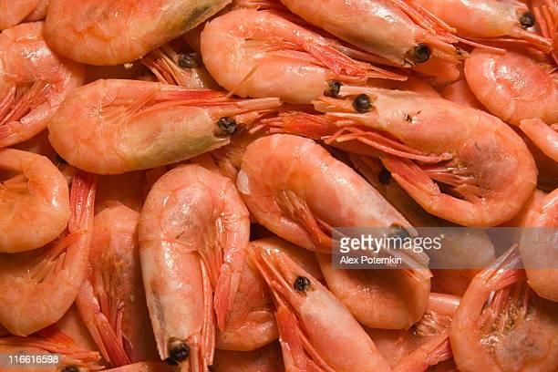 Rote Garnelen