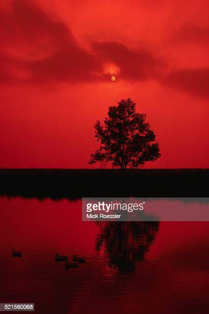 Red Sky and Tree Reflected in Water