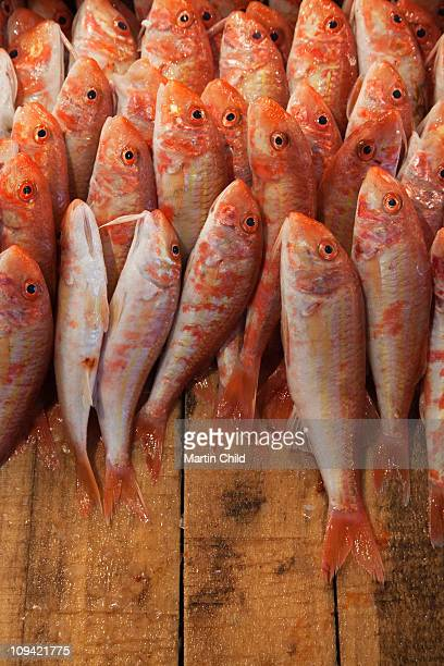 red snapper for sale in fish market