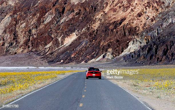 A red sports car heading up Highway 178 are surrounded by Desert Sunflowers and other colorful plants during a rare 'super bloom' of wildflowers in...