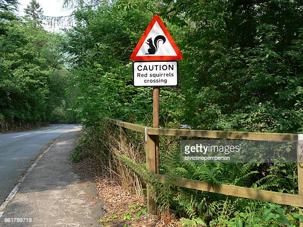 Red squirrels crossing road sign, England, UK