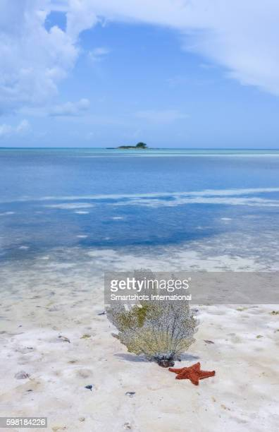 Red starfish and sea fan at low tide on white sand Caribbean beach, Cuba