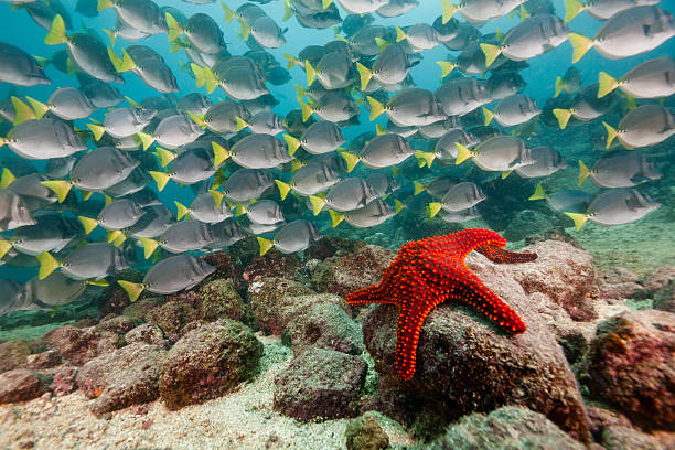 Red Starfish and Yellowtail Surgeonfish