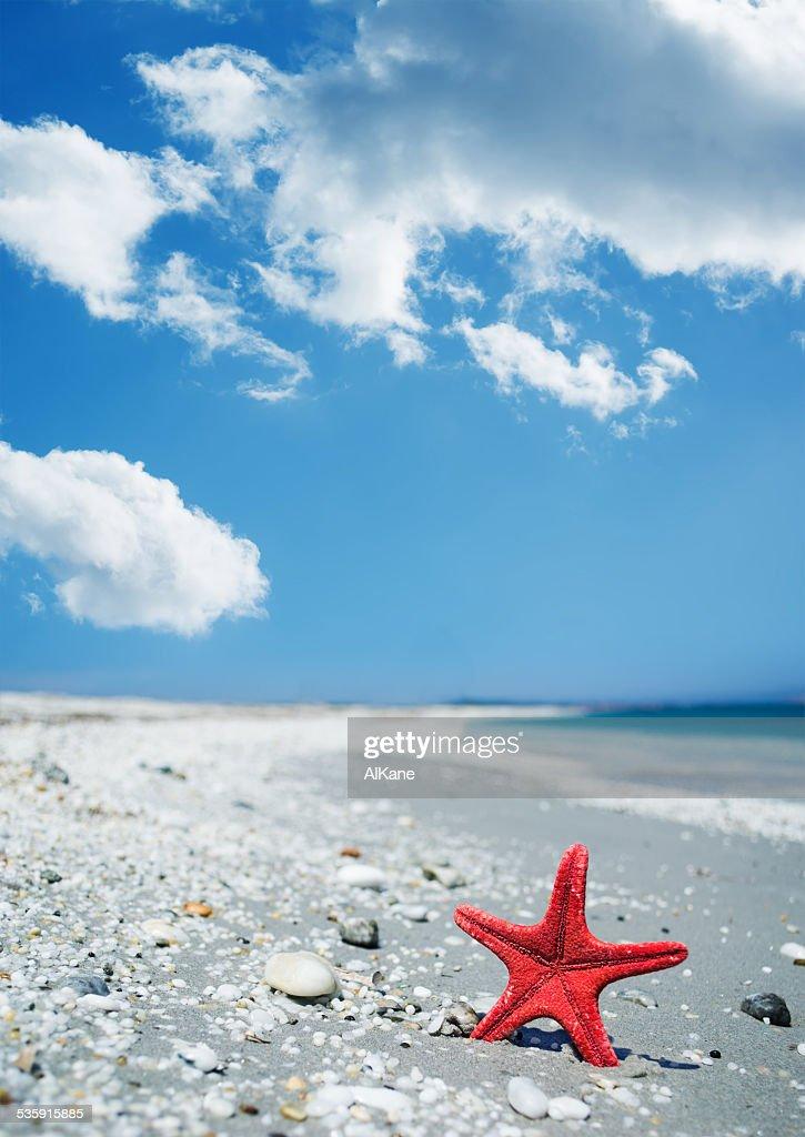 Estrela-do-Mar Vermelha pela shore : Foto de stock