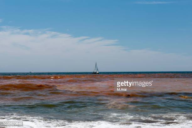 red tide - red tide stock pictures, royalty-free photos & images