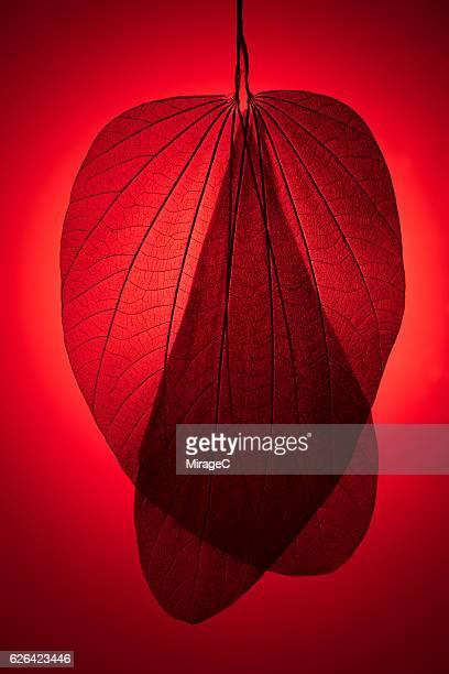 Red Toned Leaf Skeleton