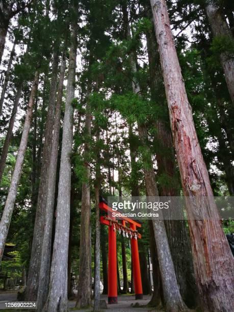 red torii with cedar trees from japanese culture. - danjo garan stock-fotos und bilder