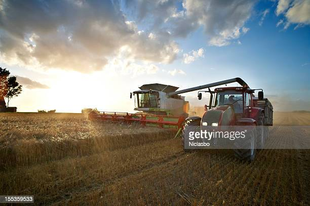 red tractor and combine - combine harvester stock pictures, royalty-free photos & images