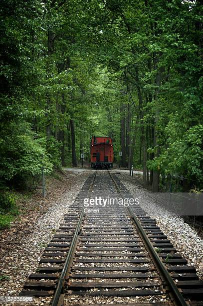 Red Train In The Forest