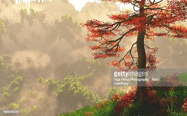 Red tree in the dawn of the mountains