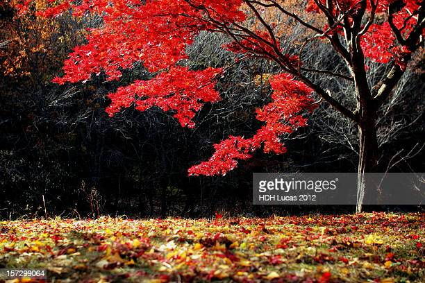 red tree - united_states_senate_election_in_virginia,_2012 stock pictures, royalty-free photos & images