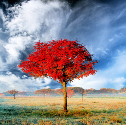 Red tree - gettyimageskorea