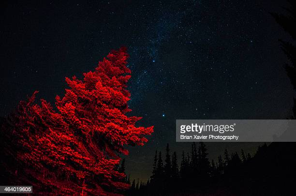 A Red Tree with Starry Sky