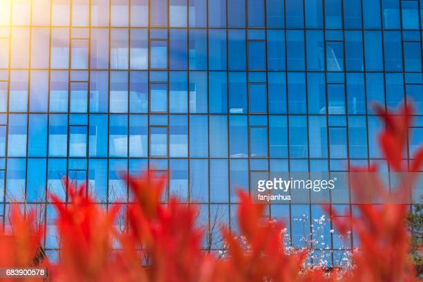 red tree with urban architecture,detail shot of business building