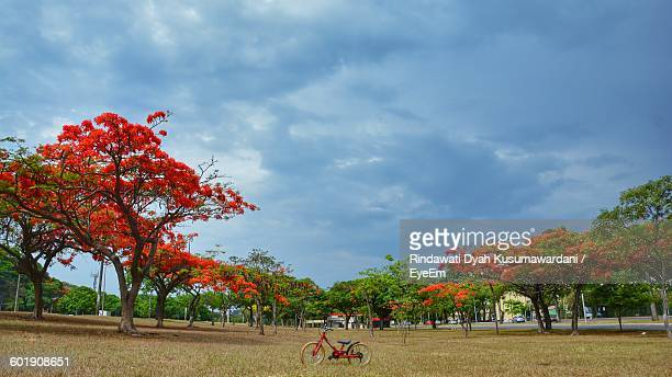 red trees in landscape - distrito federal brasilia stock pictures, royalty-free photos & images