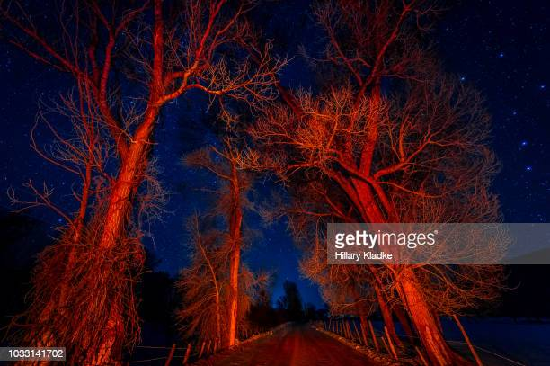red trees in winter at night - blood vessels stock pictures, royalty-free photos & images