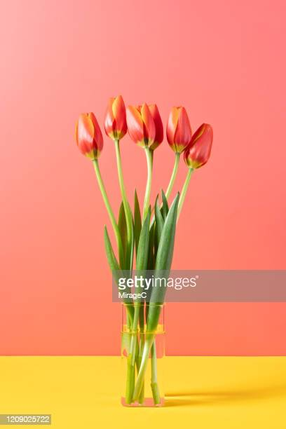 red tulips in glass vase - bright beautiful flowers stock pictures, royalty-free photos & images