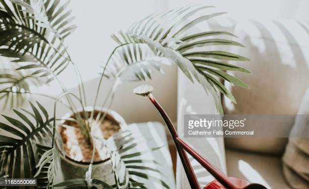 red watering can - houseplant stock pictures, royalty-free photos & images