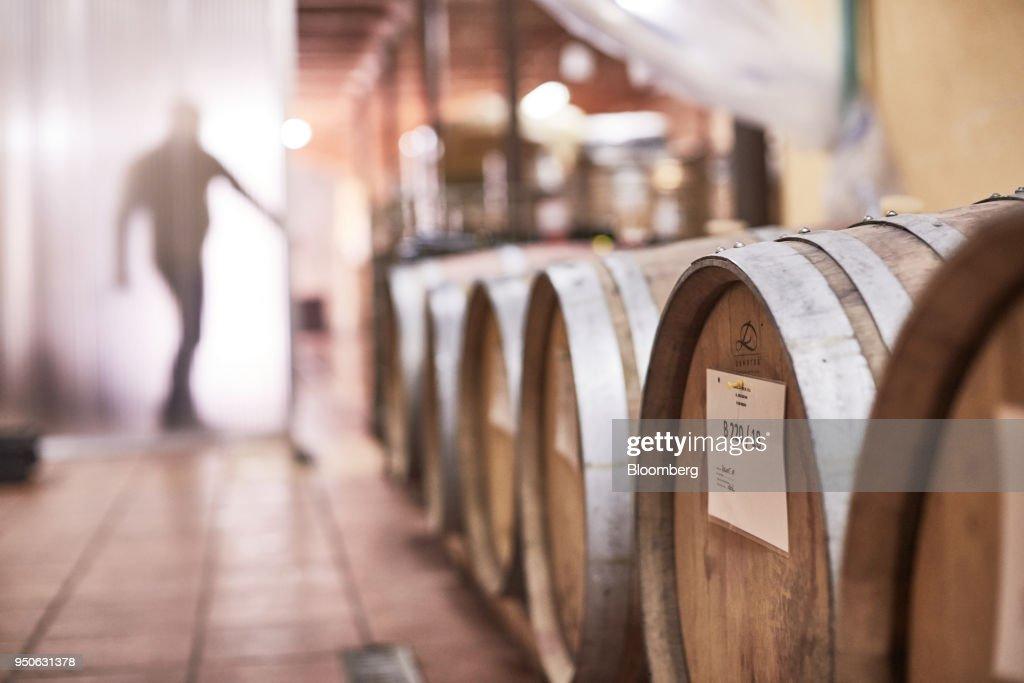 Polish Wine At Winnice Jaworek Vineyard As Climate Change Benefits Producers