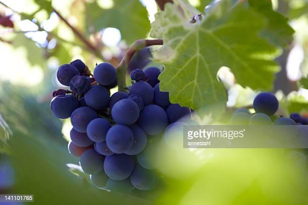 Raisin vin rouge