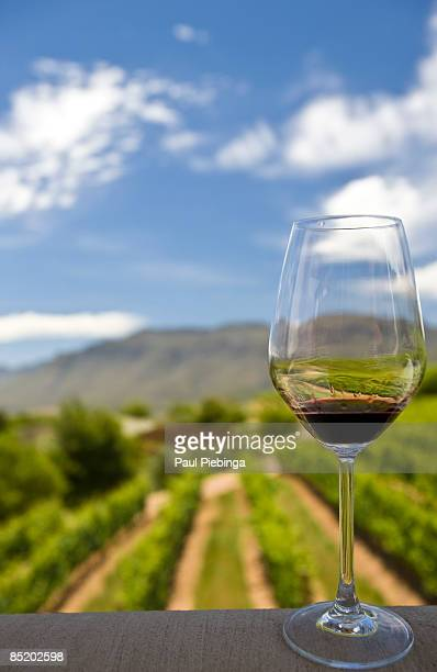 red wine - wineyard stock photos and pictures