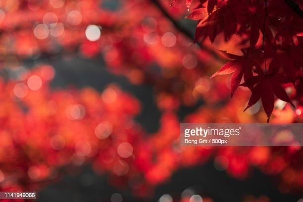 red world - 瑞浪市 ストックフォトと画像