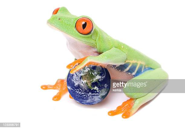 red-eyed tree frog - tree frog stock pictures, royalty-free photos & images