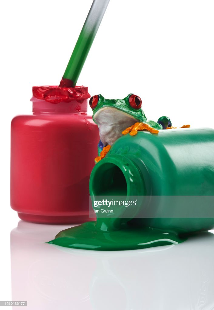Red-Eyed Treefrog on Red and Green Paint : Stock Photo