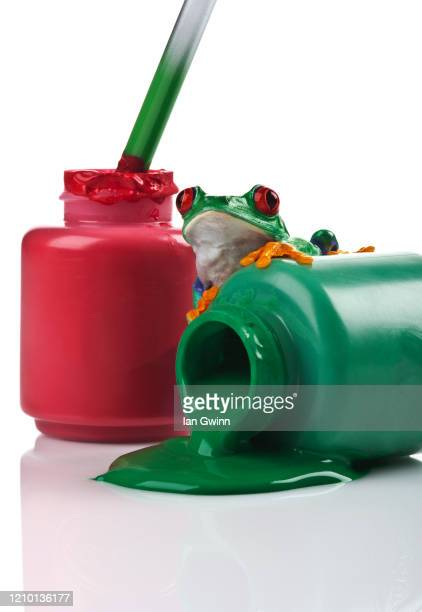 red-eyed treefrog on red and green paint - ian gwinn stock pictures, royalty-free photos & images