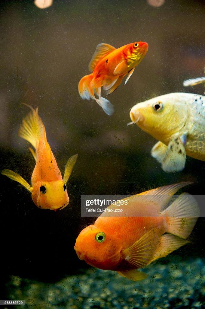 Redfish and Aquarium : Stock Photo