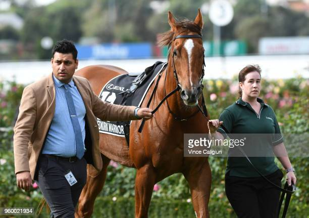 Redkirk Warrior before track gallop during Melbourne Racing at Flemington Racecourse on May 19 2018 in Melbourne Australia Redkirk Warrior will be...