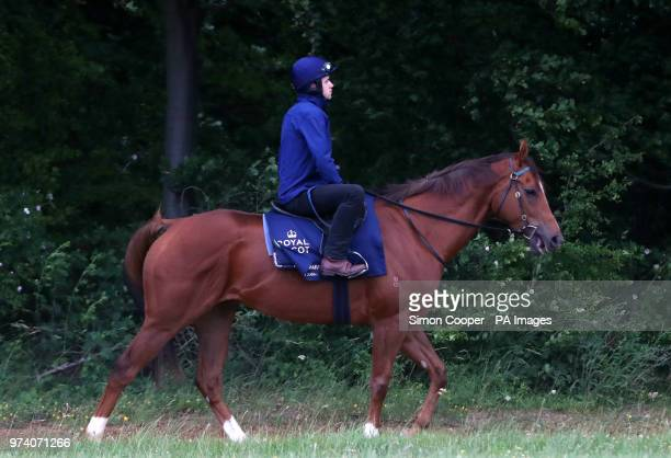 Redkirk Warrior goes to the gallops during the Royal Ascot international challengers press morning at Newmarket Racecourse PRESS ASSOCIATION Photo...