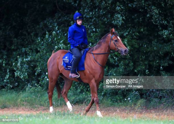 Redkirk Warrior goes up to the gallops during the Royal Ascot international challengers press morning at Newmarket Racecourse PRESS ASSOCIATION Photo...