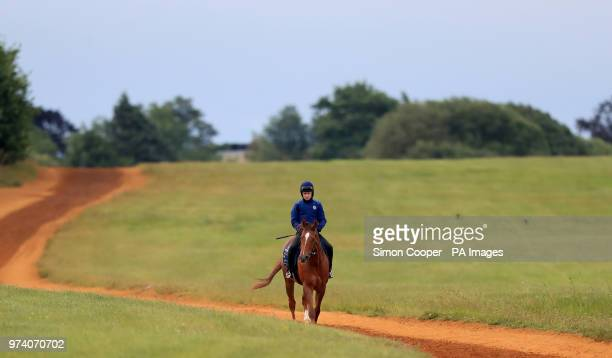 Redkirk Warrior returns from the gallops during the Royal Ascot international challengers press morning at Newmarket Racecourse