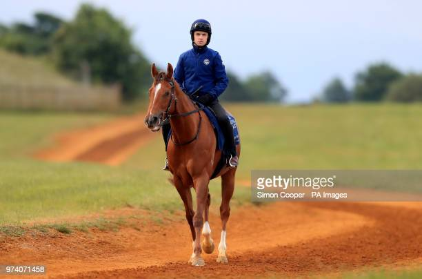 Redkirk Warrior returns from the gallops during the Royal Ascot international challengers press morning at Newmarket Racecourse PRESS ASSOCIATION...