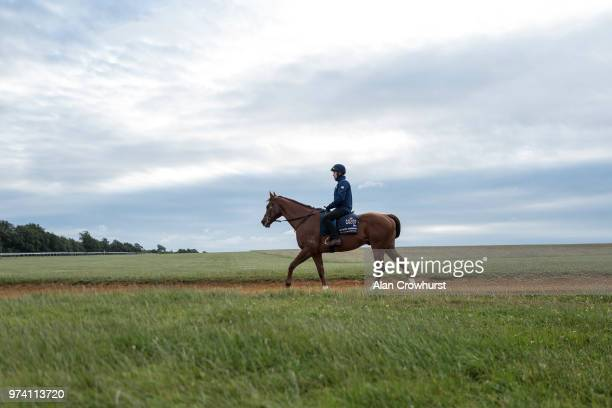 Redkirk Warrior returns from the gallops on June 14 2018 in Newmarket England