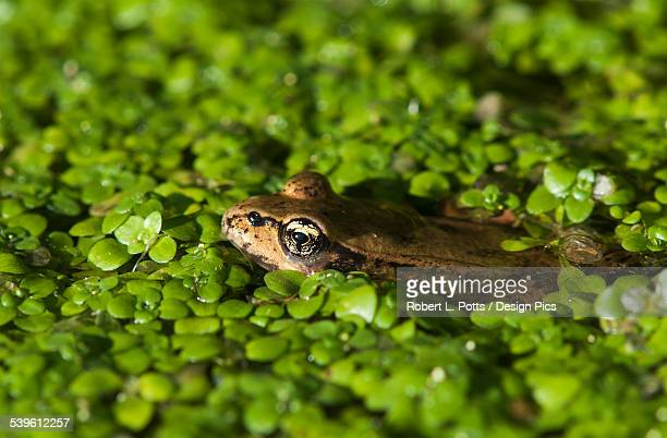A Red-Legged Frog Rests In Small Plants