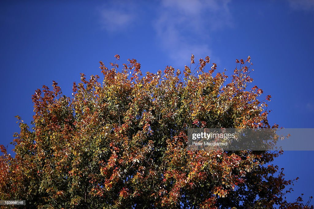 Reds and yellows are displayed on a tree in Hyde Park on October 12, 2012 in London, England. Autumnal colours are beginning to show in parts of the United Kingdom.