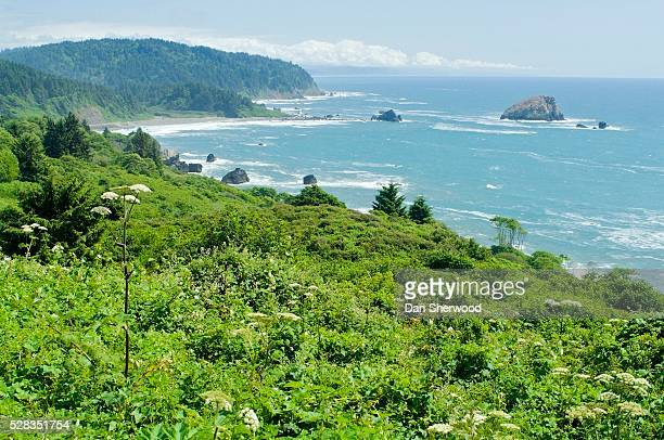 Redwood Coast, Redwood National and State Parks, California, USA